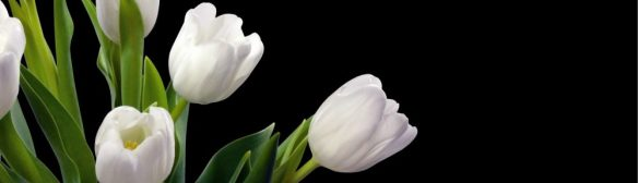 cropped-white-tulips.jpg